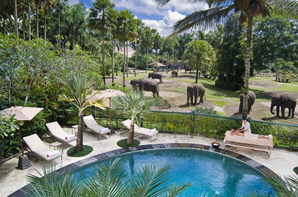 Unique hotel Elephant Safari Park Lodge2, Indonesia