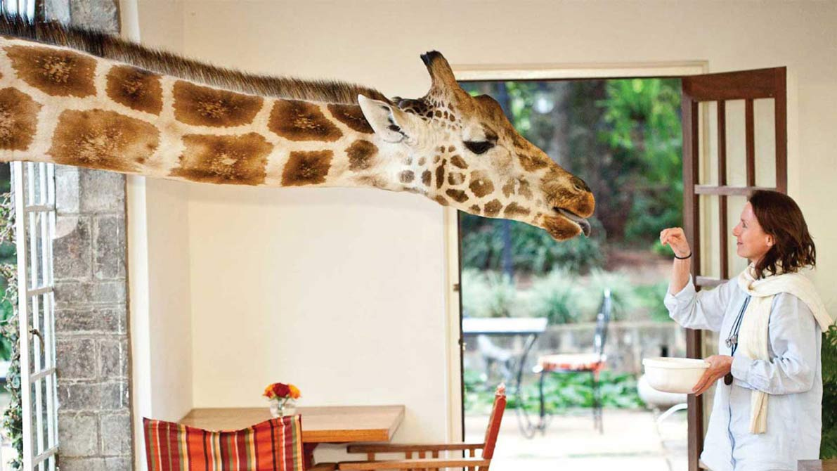 Unique hotel Giraffe Manor2, Kenya