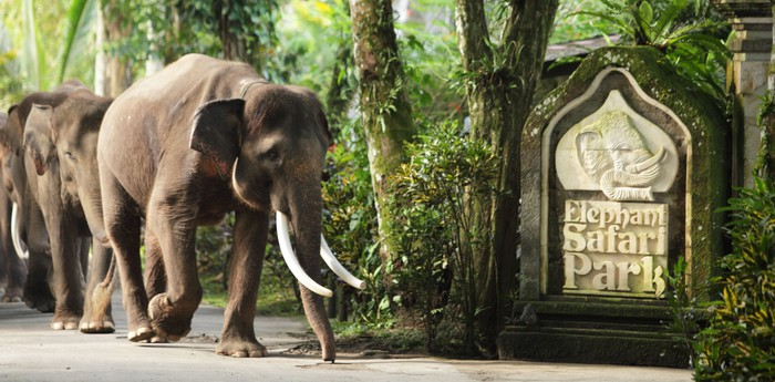 Unique hotel Elephant Safari Park Lodge, Indonesia