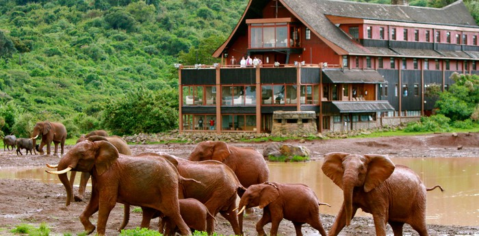 Unique hotel The Ark Kenya, Kenya